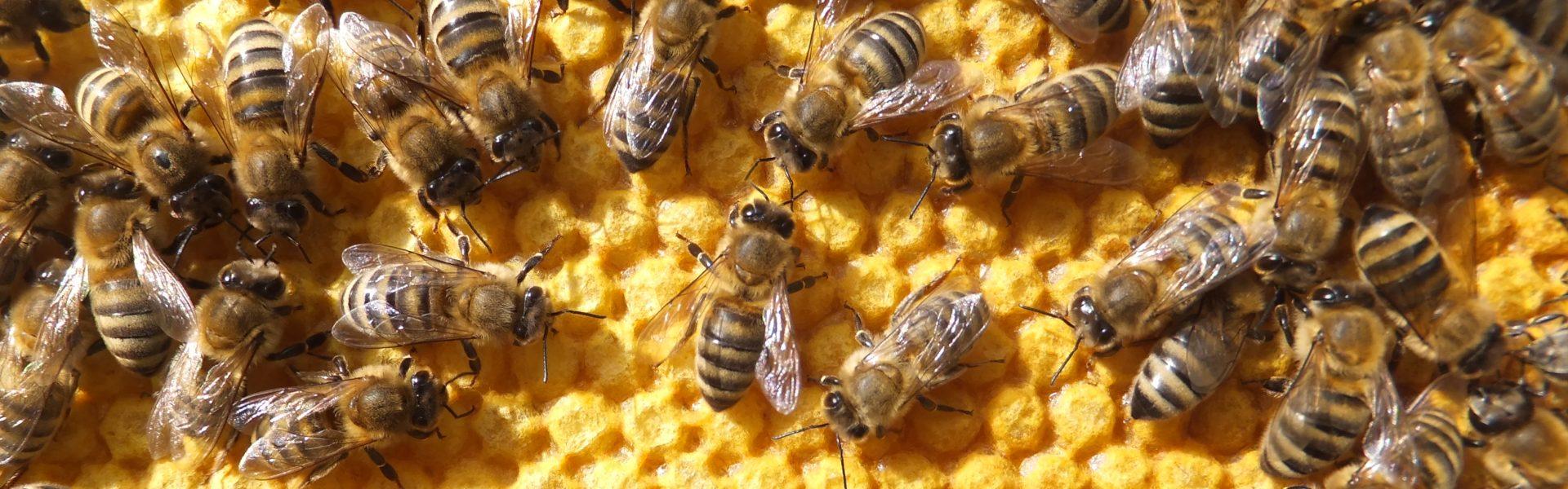 Förderverein Deutsches Bienenmuseum e.V.